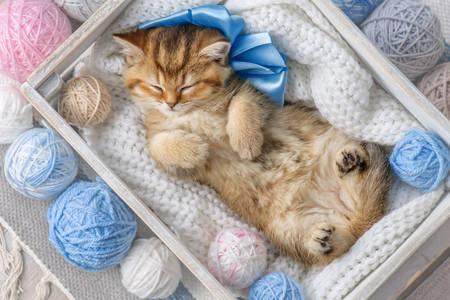 The kitten sleeps in balls of yarn