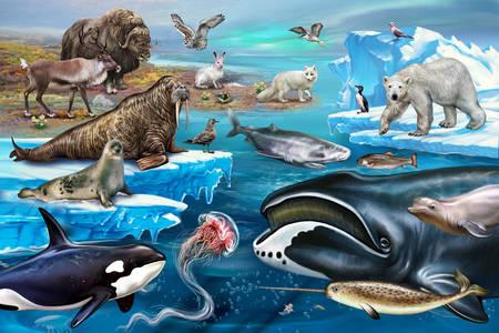 Arktische Tiere, Vögel und Fische