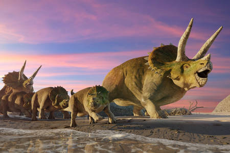 Triceratops on the beach