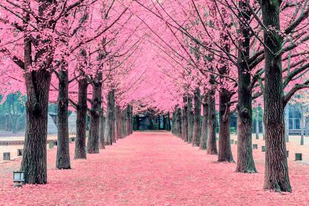 Ροζ δέντρο