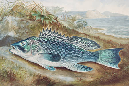 Illustration de bar de mer