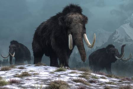 Mammoths on the hill