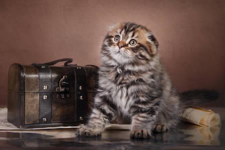 Fluffy kitte