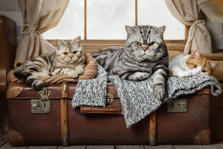 Cats on a suitcase