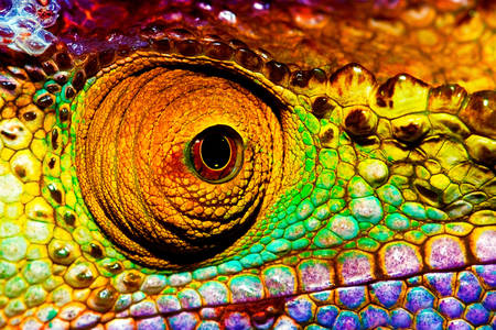 Macro photo of a chameleon