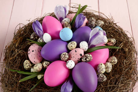 Easter eggs in a nest with crocuses