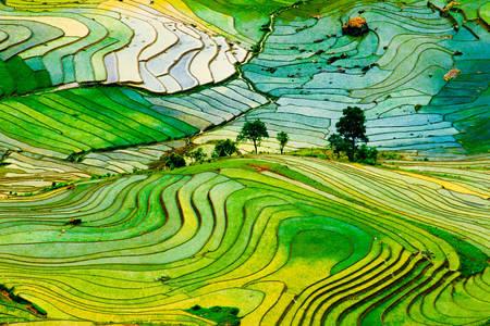 Laocai eyaletindeki pirinç tarlaları