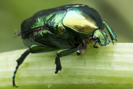 Бръмбар на лист