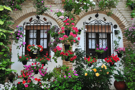 House facade in flowers and flowerpots