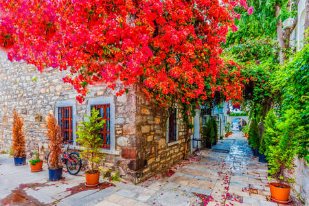 Beautiful street in Bodrum