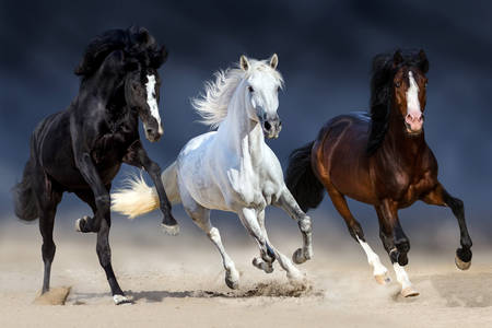 Horses of different stripes