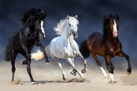 Paarden in verschillende kleuren