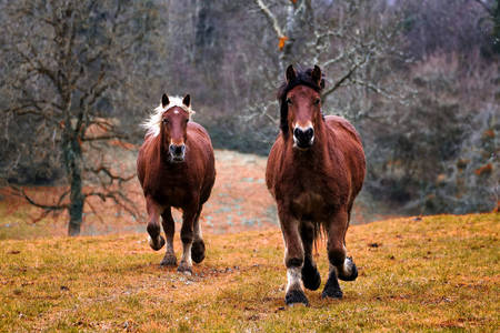 Corriendo caballos