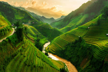 Landscaped rice fields