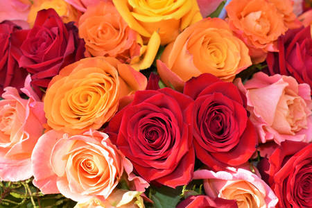 Farebné ruže