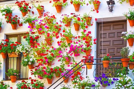 Фасад дома с цветами в Кордове