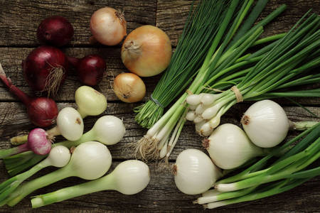 Variety of onion varieties