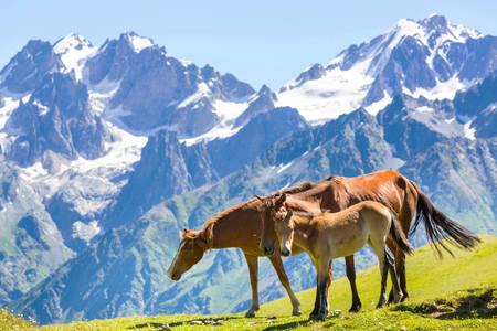 Chevaux dans les montagnes