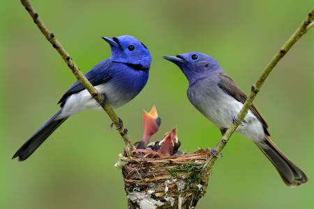Familia păsărilor