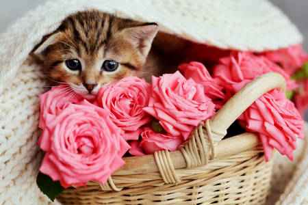 Kitten in a basket with roses