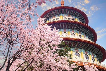 Jardín de Sakura en Taipei