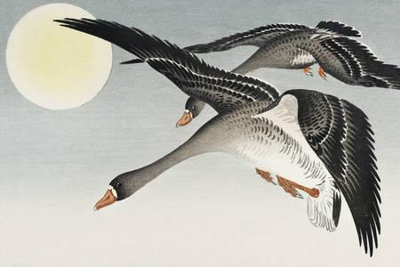 """Ohara Koson: """"Uccelli alla luna piena"""""""