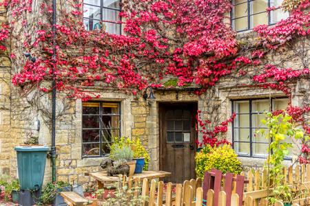 Плющ на фасаді кам'яного будинку