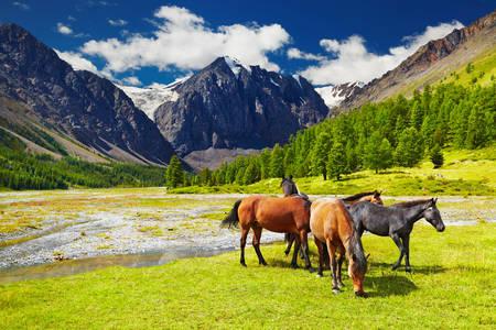 Pășunatul cailor
