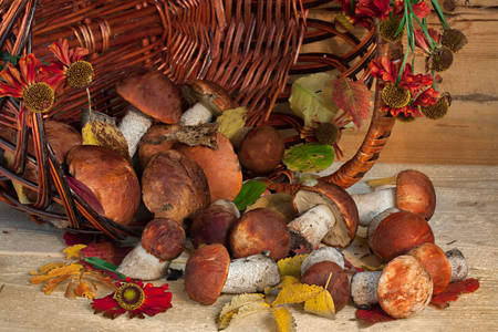 Forest mushrooms in a basket