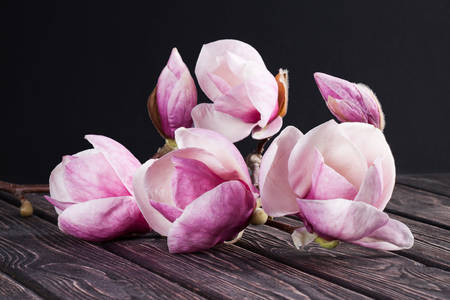 Magnolia on a wooden table