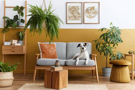 Собака на дивані в затишній вітальні
