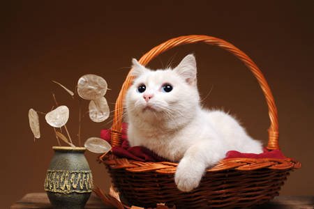 White cat in a basket