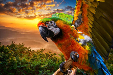 Macaw parrot on the background of sunset