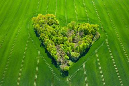 Aerial view of trees in green field