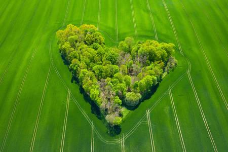 Вид с воздуха на деревья  в зеленом поле