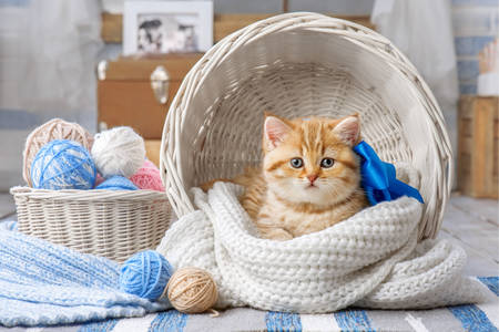 Ginger kitten in a white basket
