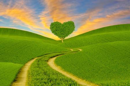 Herzförmiger Baum auf grüner Wiese