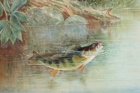 "Samuel A. Kilbourne: ""Yellow Perch"""