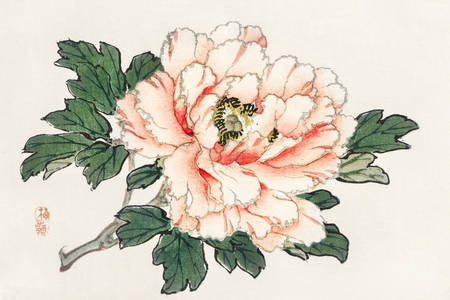 """Kōno Bairei: """"Rózsaszín rózsa"""""""