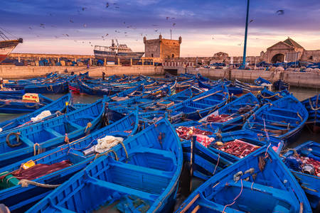 Haven in Essaouira