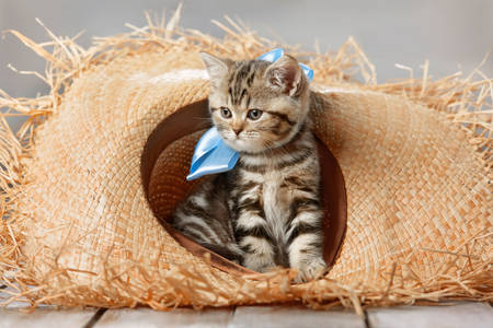 Kitten in a straw hat