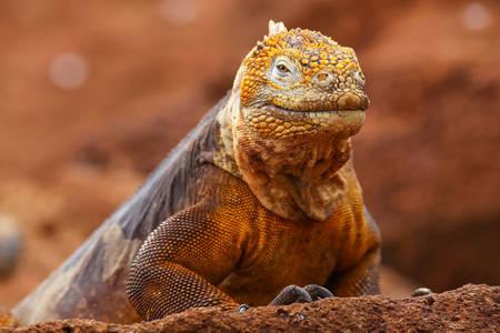 Galapagos Konolof