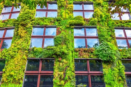 A ház homlokzata élő növényekkel