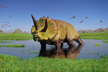 Triceratops in the swamp