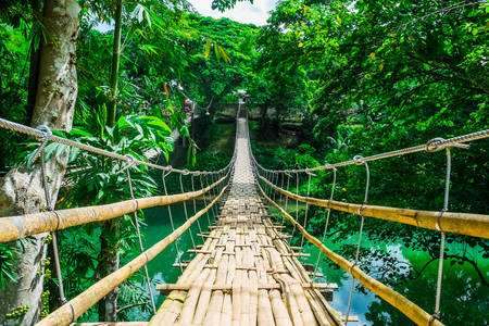 Bamboo suspension bridge