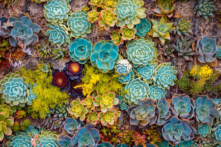 Succulents of different types