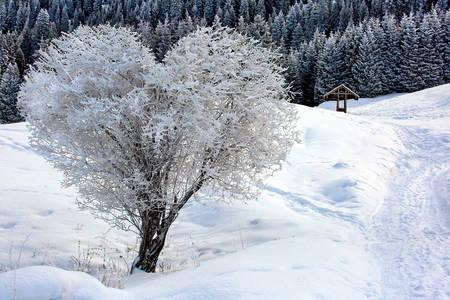 Árbol cubierto de nieve en forma de corazón