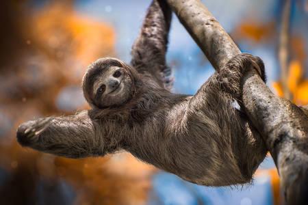 Cheerful sloth