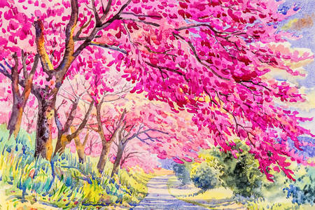 Pink wild himalayan cherry trees