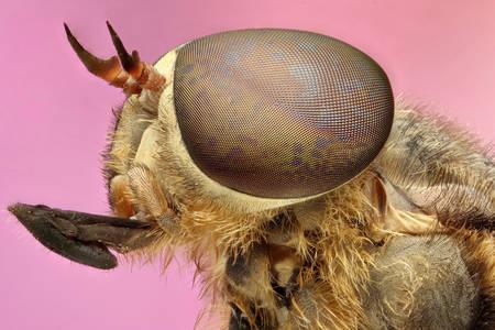 Kućna muva